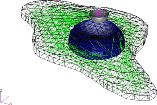 3D Geometry and mesh of computerized cell with nucleus shown in blue, actin fibers shown in green, cell boundary shown in black, and spherical indenter shown above the nucleus.